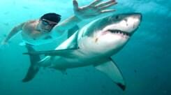 Nuoto, Phelps sfida lo squalo in diretta tv
