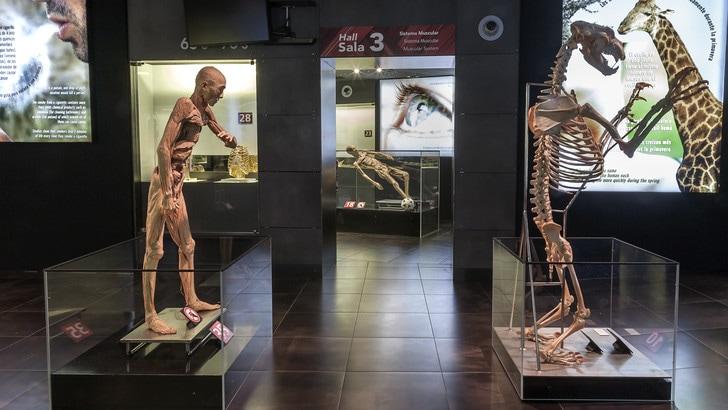 Human Bodies, il ciclo della via in mostra