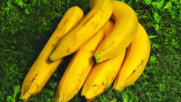 Ecco Mongee, la banana che si mangia con la buccia
