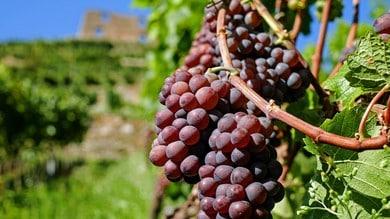"""""""Il Giorno di Bacco"""", un fine settimana all'insegna del vino"""