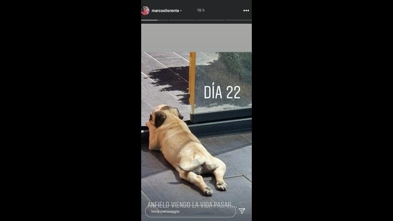 Marcos Llorente e quella incredibile doppietta al Liverpool: il suo cane si chiama Anfield