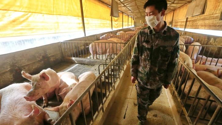 Cina, scoperto nuovo virus: