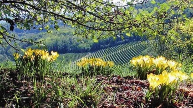 Sacro Monte di Crea: natura spirituale