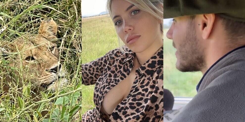 Lady Icardi, l'incontro ravvicinato con una leonessa in Africa